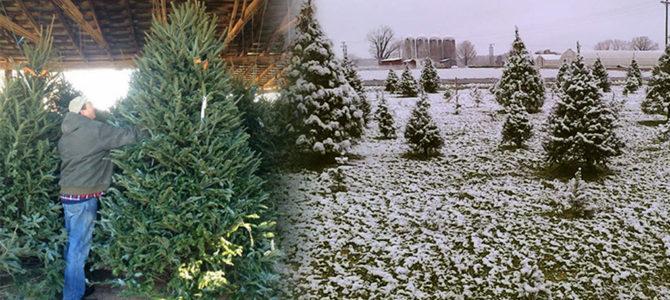 Christmas Tree information!
