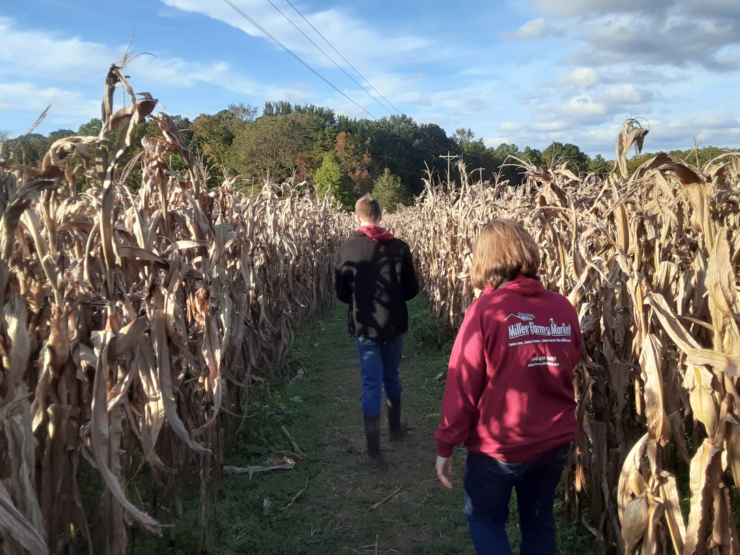 Explore our 8 acre Corn Maze!  The weather is perfect!