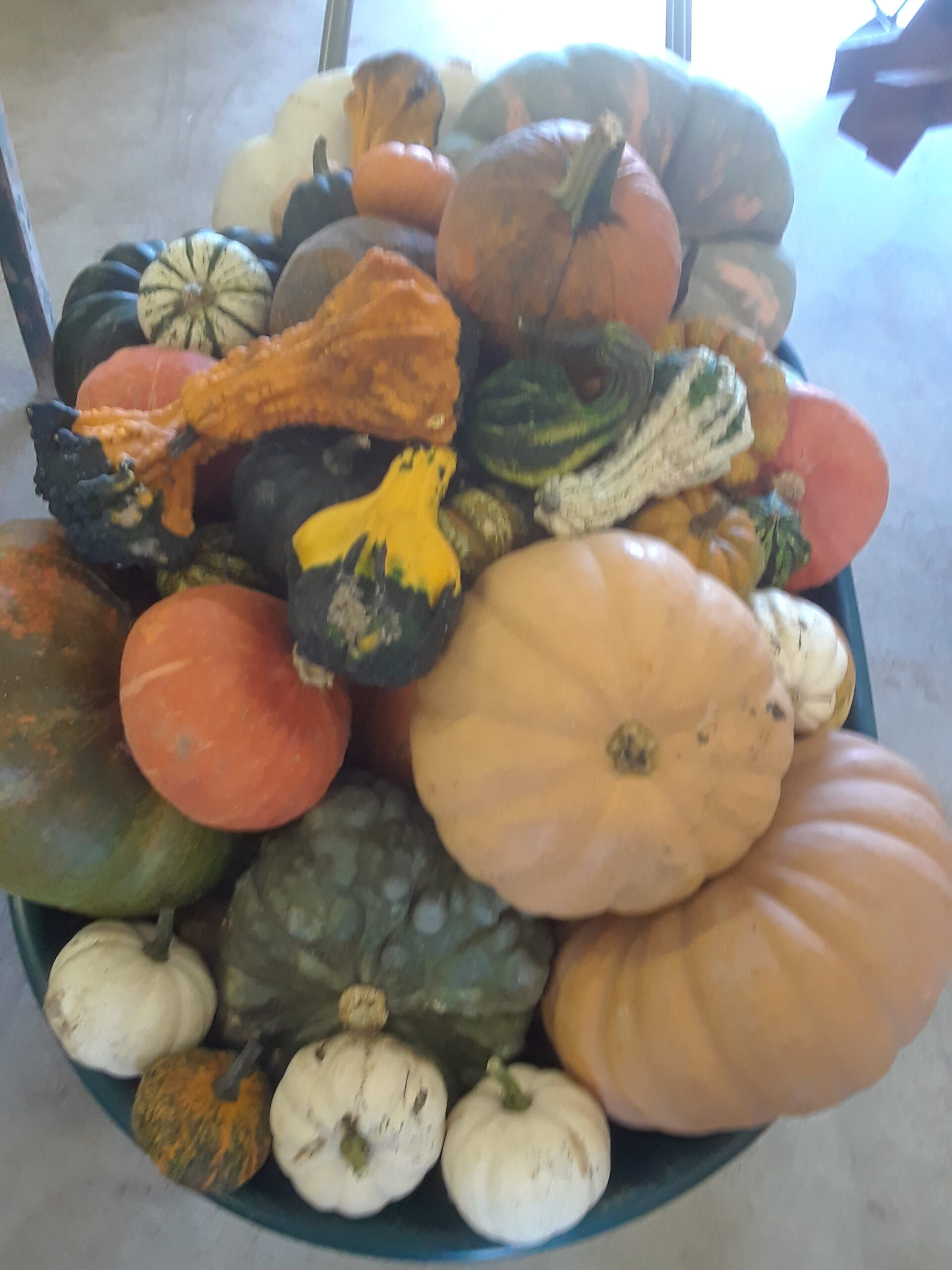 It's not too late! We still have PLENTY of PRE-PICKED PUMPKIN under the Barn Roofs behind the Market.